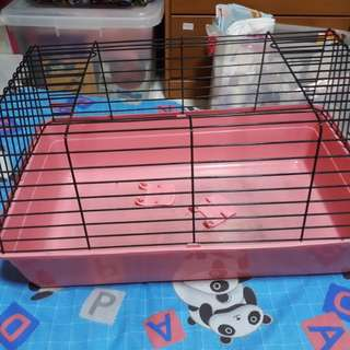 Guinea pig cage with bedding and dry food