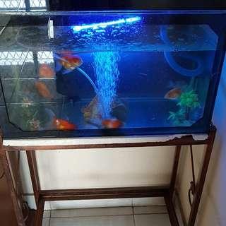 Aquarium Plus Meja Plus Ikan 9 Koki