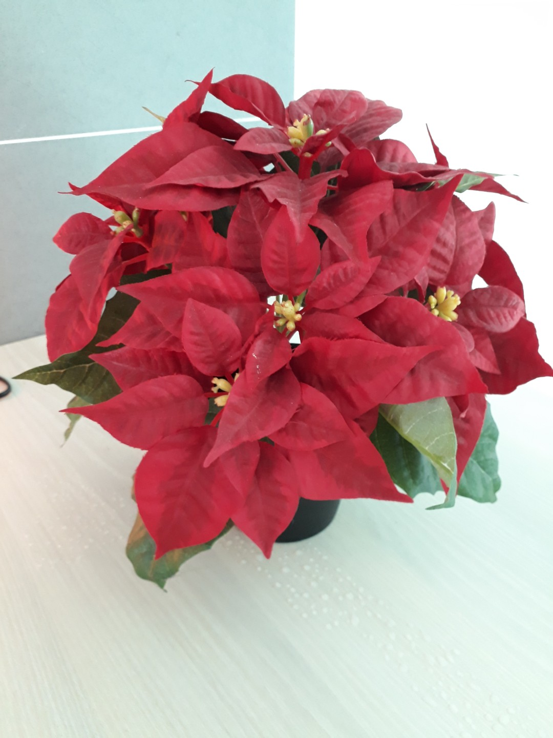 Carousell & IKEA Artificial Christmas Flower with pot