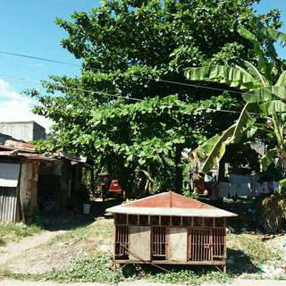 "Lot for SALE ""RUSH"" at Golden Acres Subd Las Piñas"