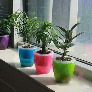 Transparent Self Watering Planter Flower Pot Double Layers (Available in 6 Colours & 3 sizes)