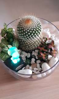 Plant secculents and catus terrarium