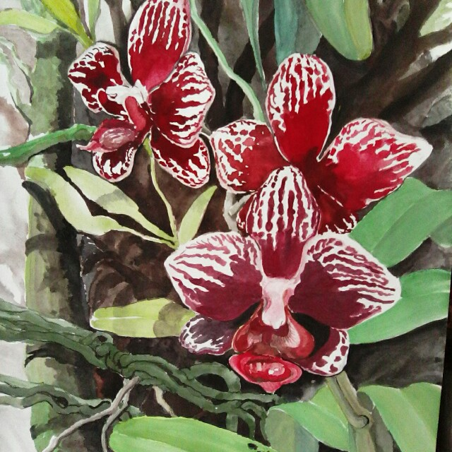 Exotic Orchids Of Malaysia Design Craft Artwork On Carousell