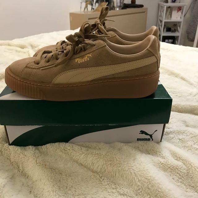 New Pumas!