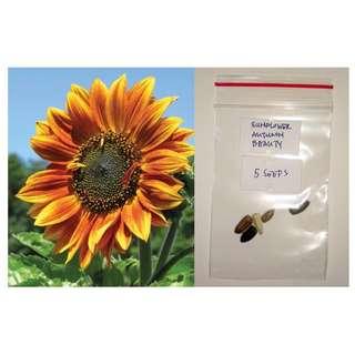 Sunflower Flower Seeds -  Lemon Queen, Autumn Beauty, Dwarf Sunspot, Velvet Queen