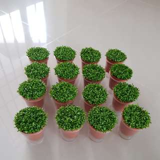 New Stock Happy Plant For Office & Gift!