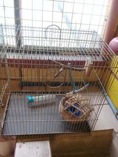 Bird cage for sale urgent