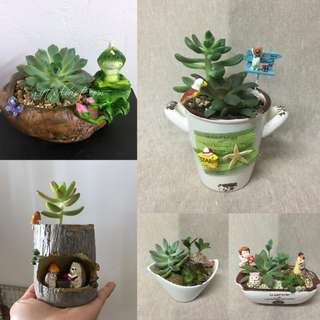 This Month Special: Simply Beautiful Succulent Plants