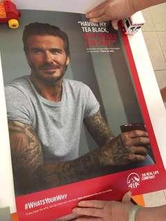 Brand New David Beckham Poster 60cm x 40cm