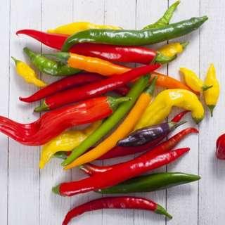 Hot Pepper 'Caynne Blend' ( 10 seeds)