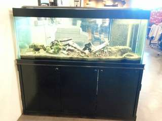 Used 5ftX2ftX2ft Fish tank with cabinet
