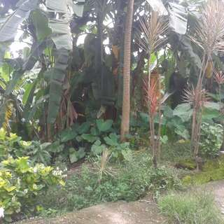Lot for Sale in Banlat Tandang Sora