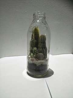 Glass bottle 🌵
