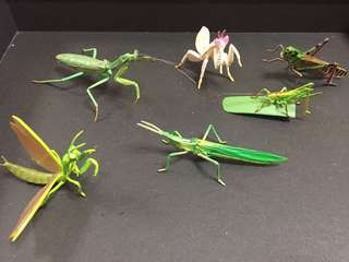 Ultra Rare  6 Grasshopper & Prying Mantis collection