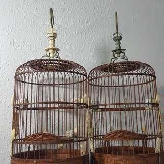2 arowana puteh cage