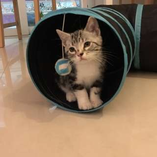 Cat Tunnel - T Shape\ Cat Toys