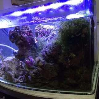 兩尺開放缸含底櫃 海灣 魚缸