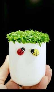 Pre order happy plant!
