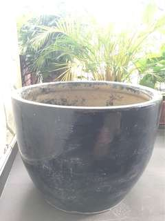 Lotus planter pot / water garden / pot for pet fish