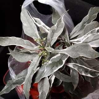 Easy indoor/outdoor plants