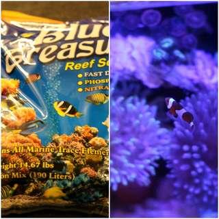 🚚 免運費 水族先生 Mr.Aqua藍色海洋軟體鹽 6.7公斤 魚及軟體皆通用海水素