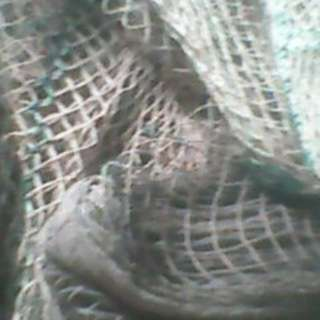 Buying USED or Scrap FISHNET