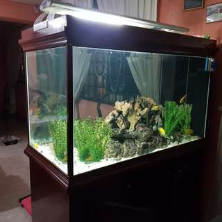 Fish Tank with wooden cabinet & sump tank (4ft x 2ft)