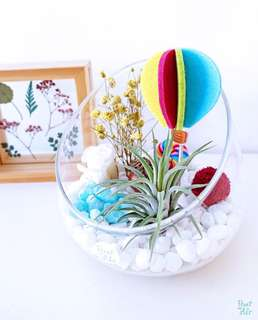 Aerium: Whimsical Vase with air plant and preserved flowers