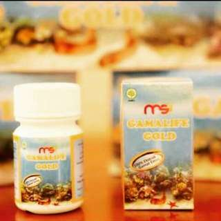 GAMALIFE GOLD MSI