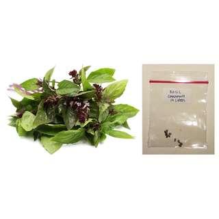 Cinnamon Basil Herb Seeds