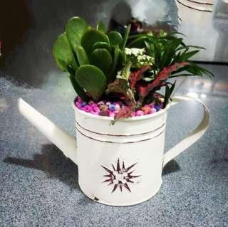 Flower pot terrarium