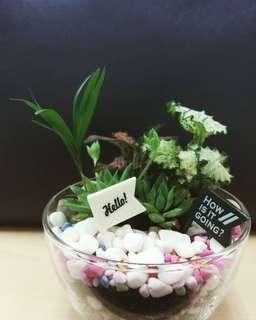 Mini Garden Terrariym
