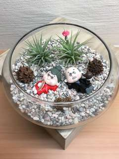 Couple Airplant Terrarium