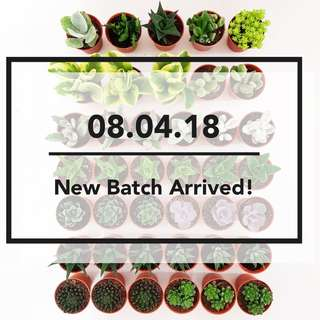 08.04.18 New Batch Arrived!