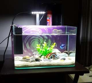 [ON-HOLD] Fish Tank / Aquarium
