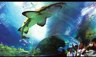 Aquarium klcc entrance ticket