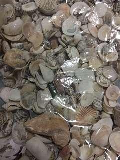 Sea shell 🐚