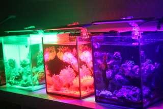 🚚 MR.Aqua 水族先生『MA5遙控式多色LED夾燈』魚缸燈界的魔法師 22公分 魚缸,增豔燈,水族夾燈
