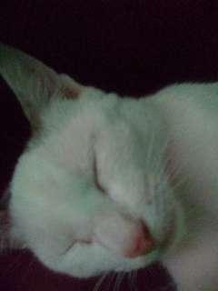 jual kucing kampung tapi unik warna mata nya berbeda biar jelas WA 081310808801