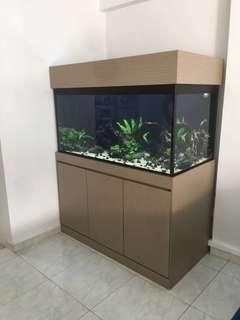 Fish Pond & Fish Tank maintenance