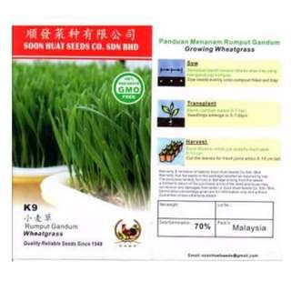 K9 Wheatgrass seeds