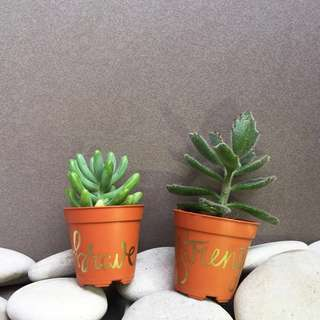 Succulent with Customized Pot