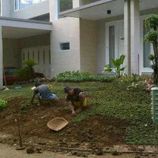 Tukang taman sejabodetabek. Tukang rumput dan pohon hias