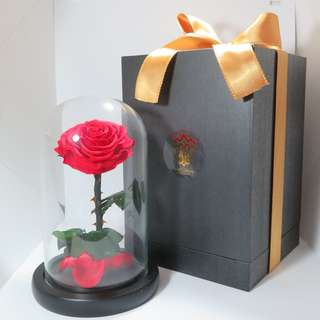Preserved Flower - Glass Dome - The Enchanted Rose | Birthday Present | Gift Box | Rose | Wedding | BNIB |