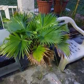Potted plants (big)