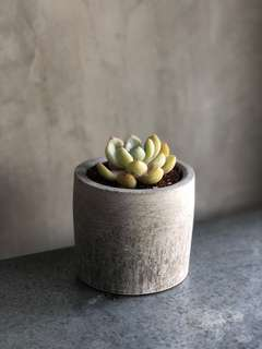 Large Cylindrical Round Cement Planter