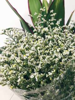 [WHILE STOCKS LAST] Fresh White Limonium