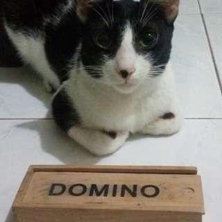 Domino wood