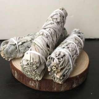 6吋白鼠尾草$200三札(現貨)