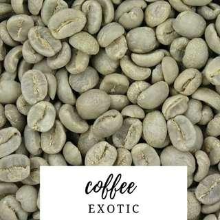 Gardening ♡ Exotic Coffee Plant Fresh Seeds X 3